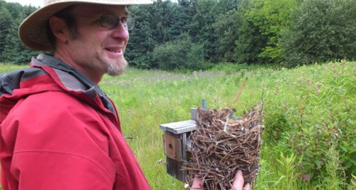Stewardship-bird-box-monitoringSM