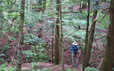 Forest Bathing: What is it, and how can it help me?