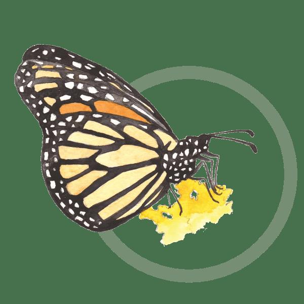 Give - Oak Ridges Moraine