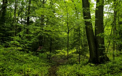The Healing Powers of Nature for Seniors